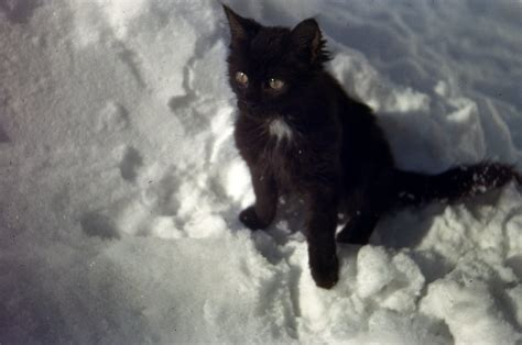 """Cat in Snow, c1943 