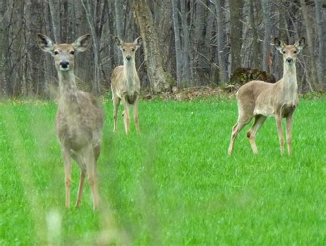 Central Wisconsin hunters being urged to test deer for CWD
